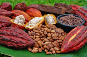 Cocoa Beans and Pods